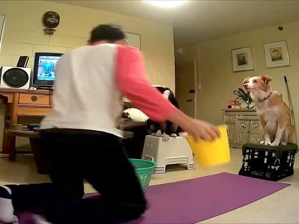 Když si hraje vycvičený pes