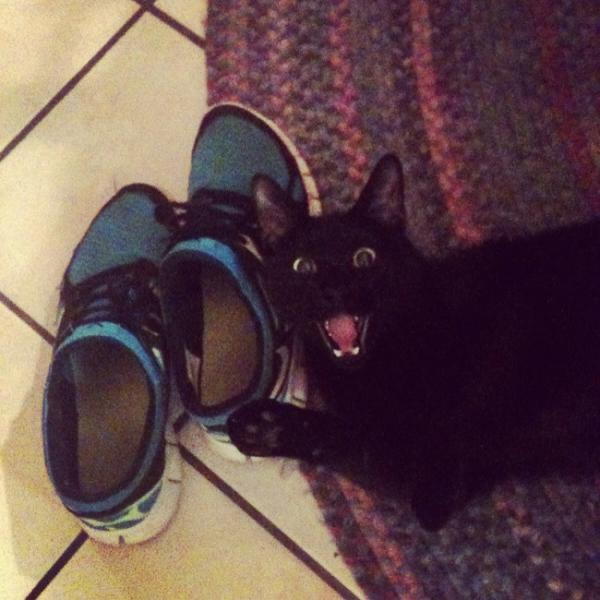 GALERIE - 10 koček, které milují boty