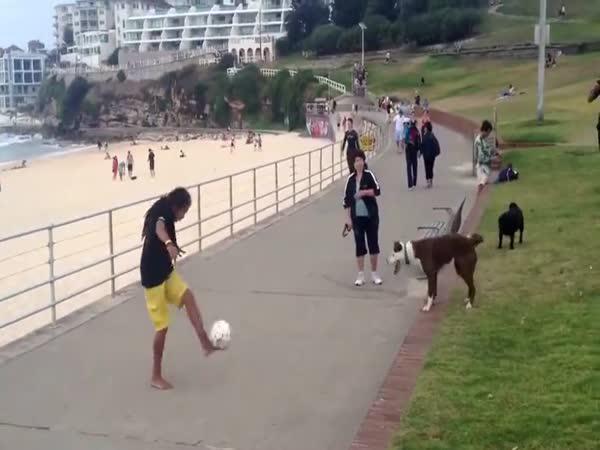 Pes nejlepší spoluhráč