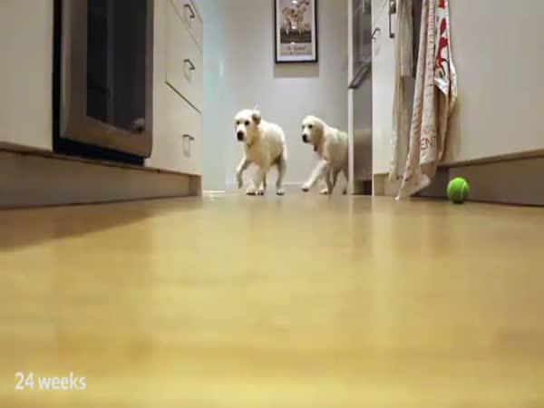 Timelapse - Takhle rostou psi