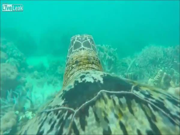 GoPro na želvě