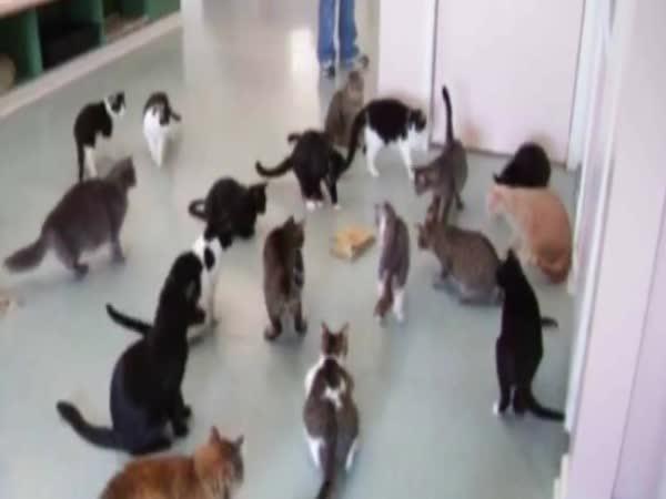 Kompilace - Když se kočka lekne