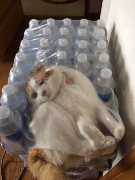 GALERIE - 25 velmi hloupých koček
