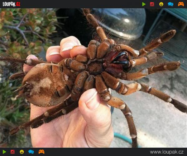 GALERIE - Největší zvířecí potvory