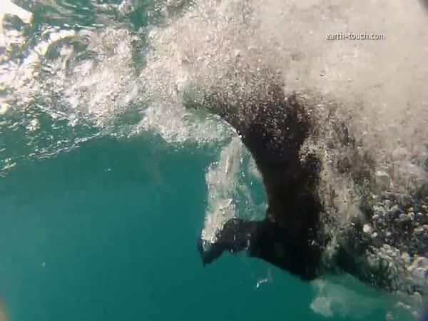 Pes plave s delfíny