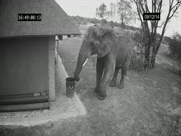 Slon uklízeč