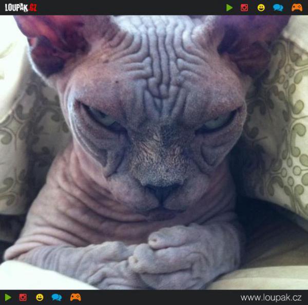GALERIE - Kočky s vražednými úmysly