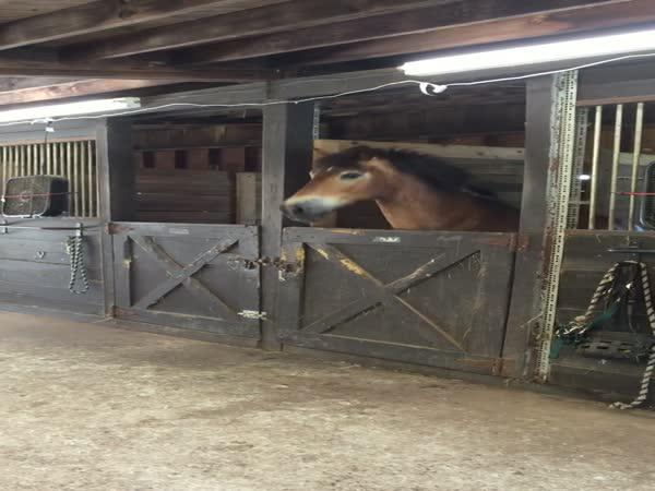 Kůň - uprchlík