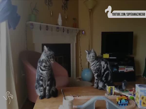 Velká kočičí záliba