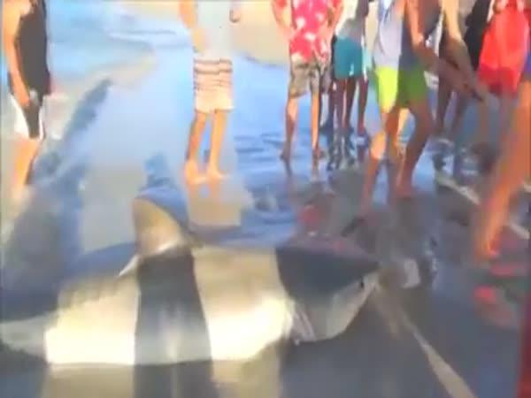 Záchranáři zvířat