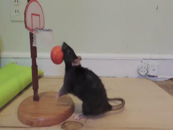Vycvičení potkani