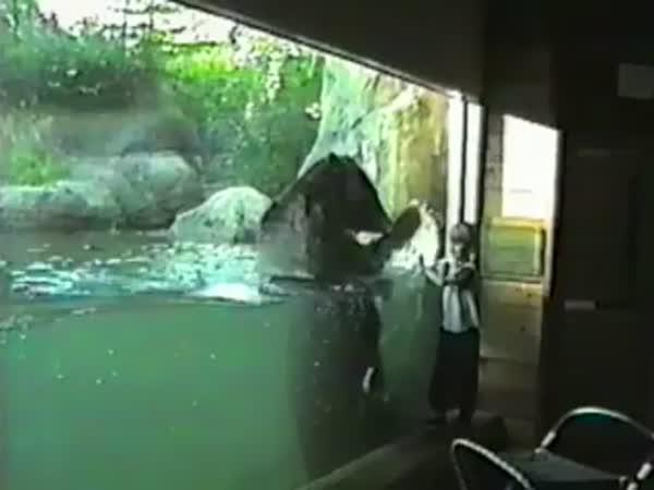 Faily dětí v akváriu a zoo