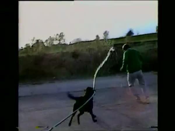 Labrador s hadicí vs páníček