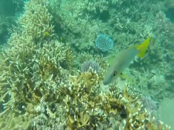 Plavba mořem z pohledu želvy