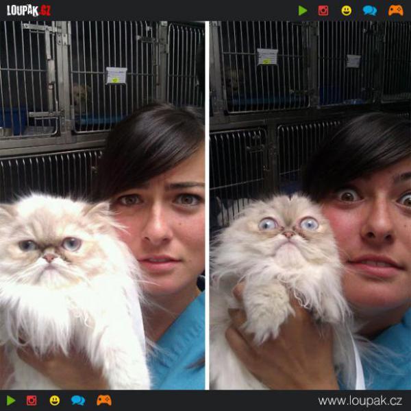 GALERIE - Kočky nesnášejí veterinu