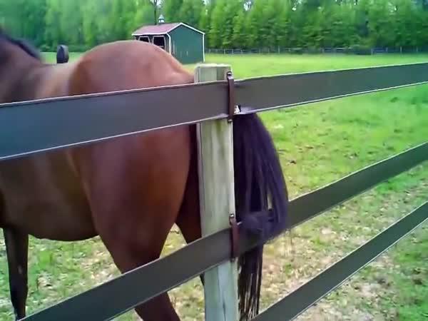 Když kůň neposlouchá