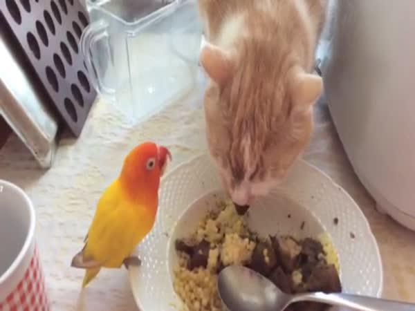 Kocour a papoušek jí společně