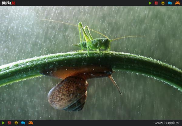 GALERIE - Zvířata v dešti