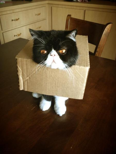 GALERIE - Zábavné kočičí momenty