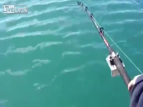 Boj o úlovek - Rybář vs. kosatka