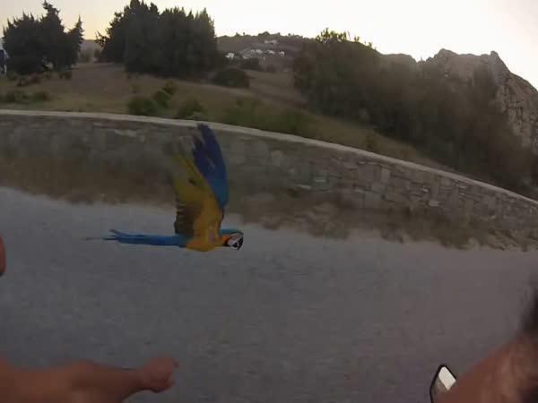 S papouškem na vyjížďce