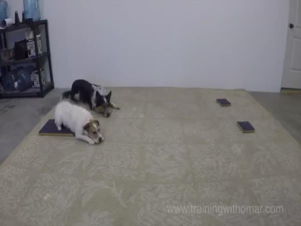 Dokonalá psí disciplína