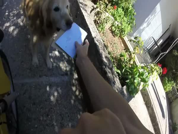 Domácí pošťák