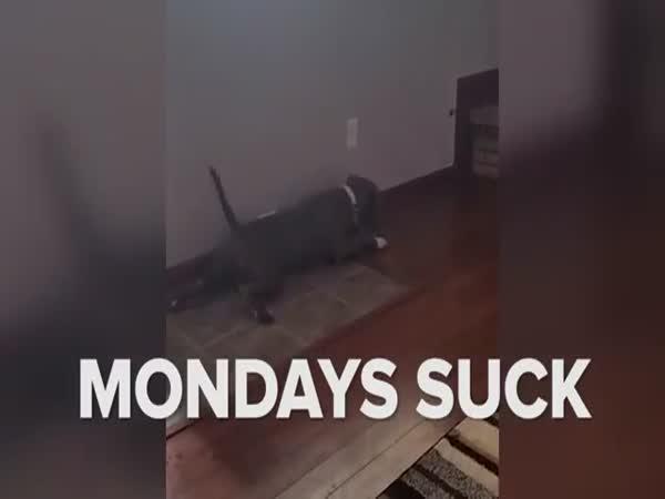I psi mají své dny