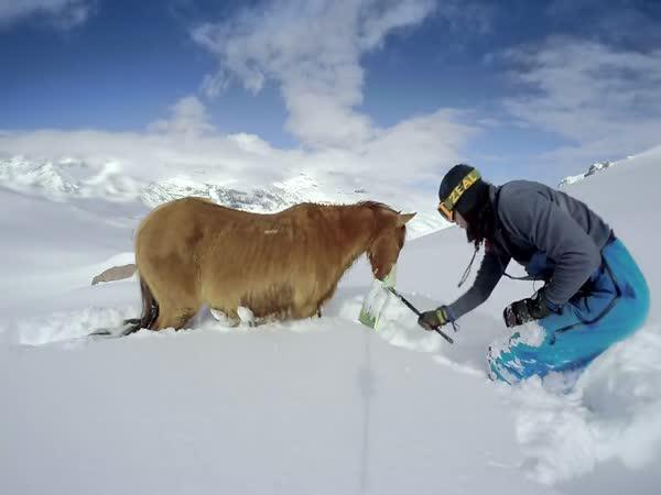 Záchrana koně z hlubokého sněhu