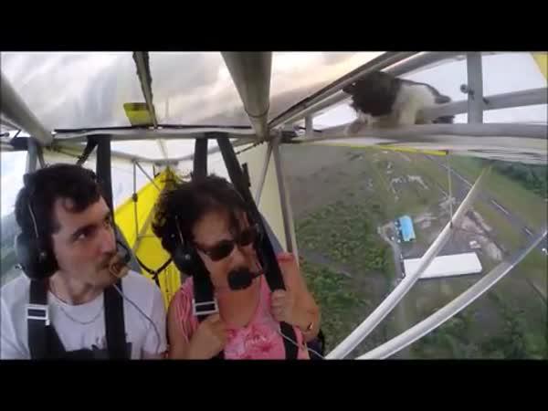 Kočka na letadle