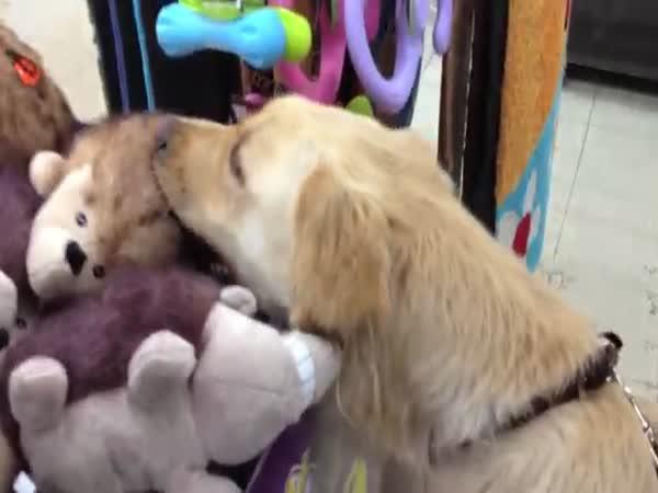 Pejsek vybírá svou první hračku