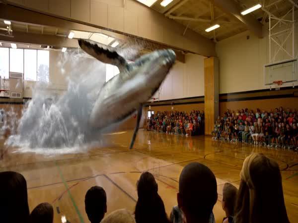 Velryba v tělocvičně