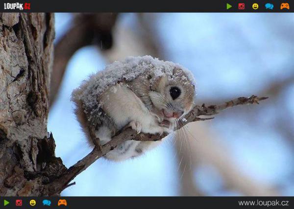 GALERIE - Nejroztomilejší zvířátko na světě