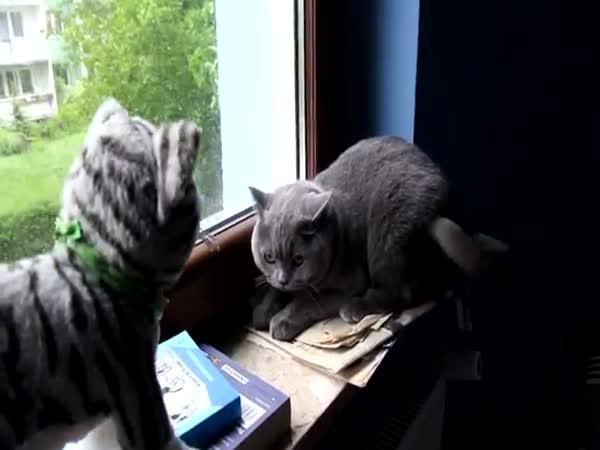 Jak naštvat kočičku