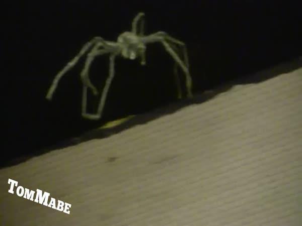 Nejlepší prank - Létající pavouk