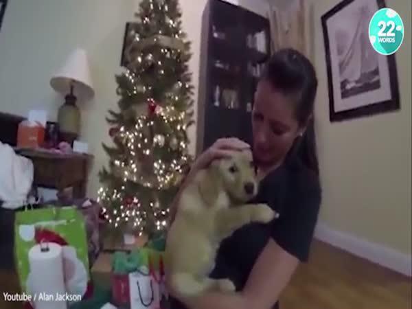 Reakce lidí, když dostanou štěně
