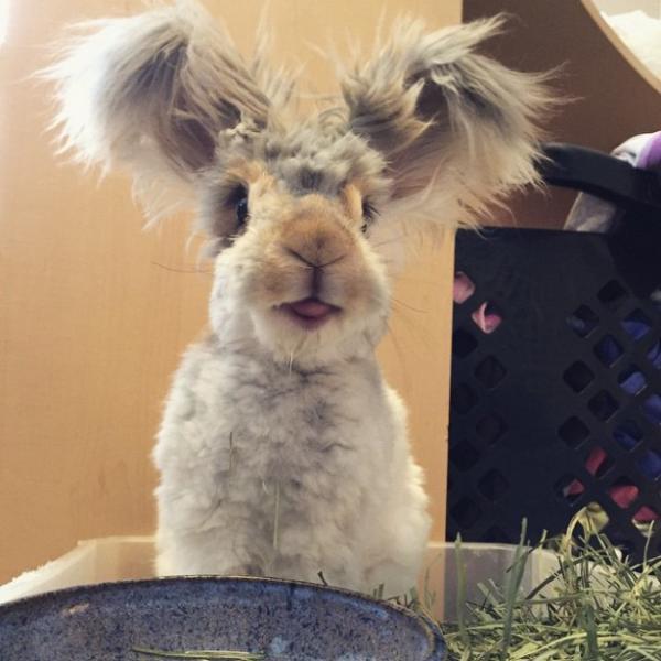 GALERIE - Nejroztomilejší králíček Wally