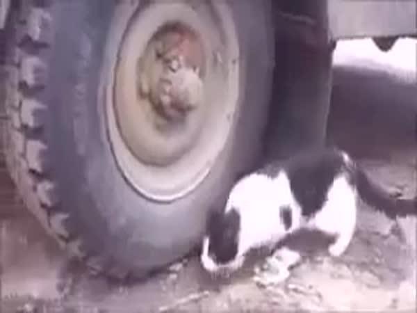 Tom a Jerry ožili!