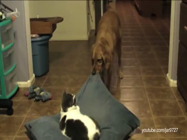 Kočka má vždycky navrch