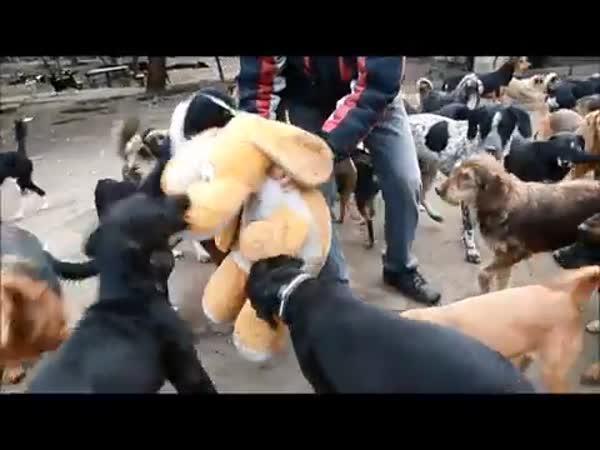 Postavil útuek pro 450 psů