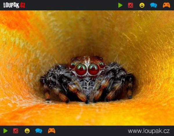 GALERIE - Děsivá pavoučí očka