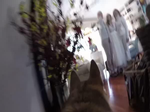 Svatba ze psí perspektivy