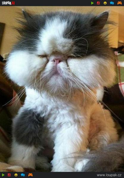 GALERIE - Když kočku štípne včela
