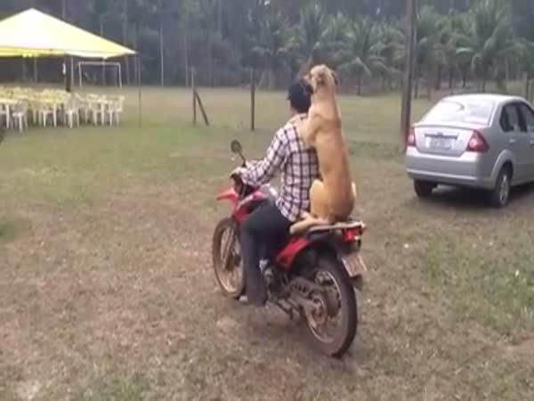 Psí spolujezdec na motorce