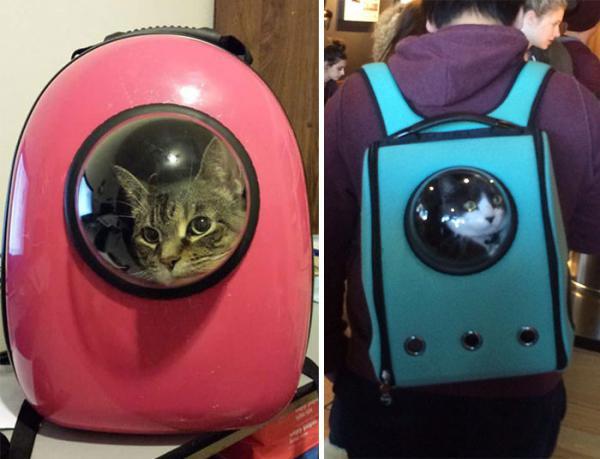 GALERIE - Kočky cestují jako astronauti