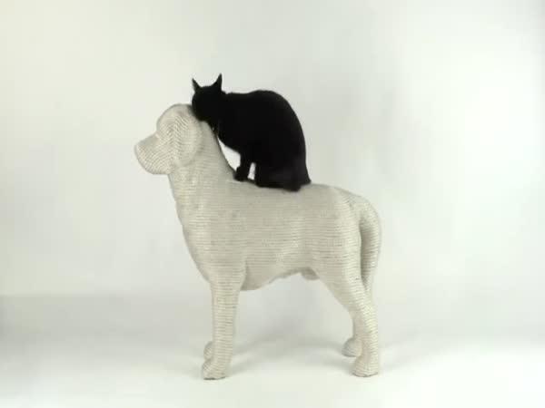 Kočka a její nové škrabadlo