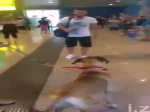 Uviděl svého páníčka po 3 letech