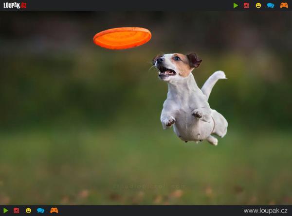 GALERIE - Létajíci psi