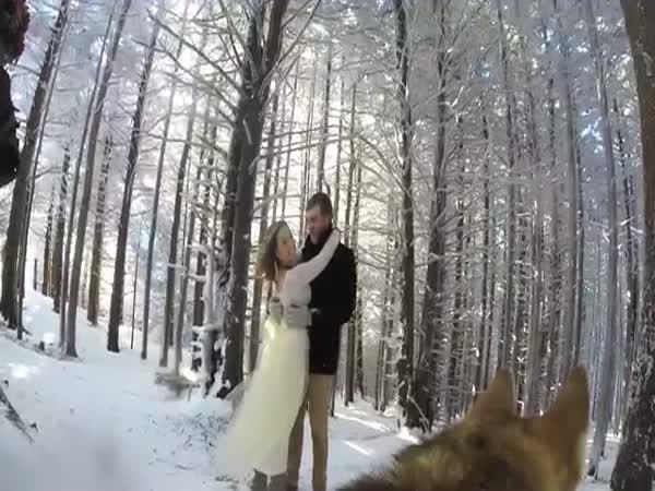 Pes natáčel svatbu