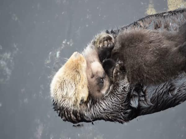 Relax na mámině břiše